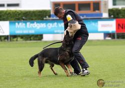 Bundesmeisterschaft SVÖ