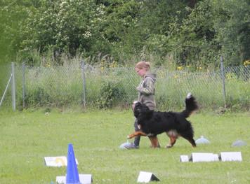 Anforderungen Rally -Obedience Trainer geändert