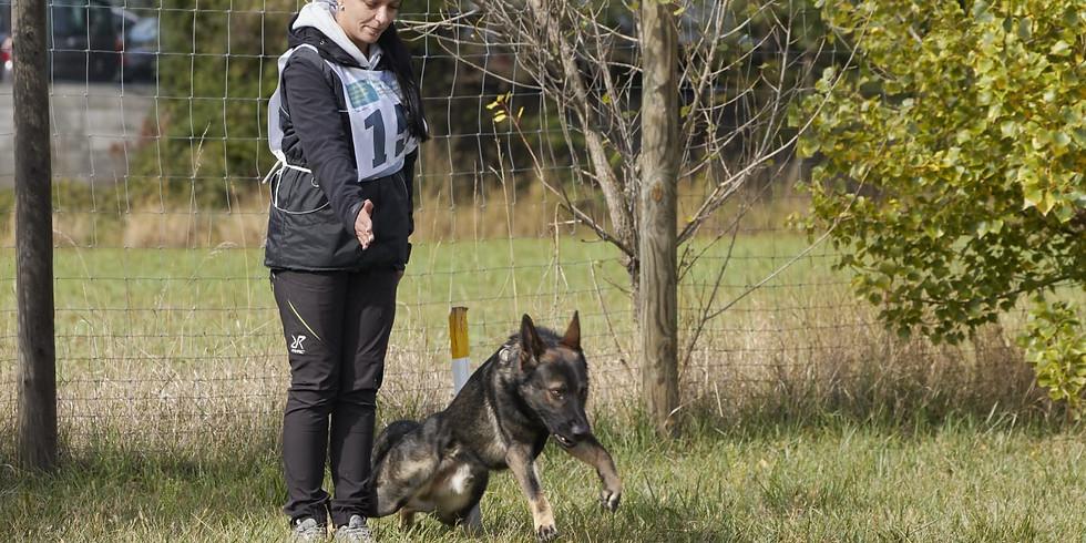 ÖRV A-Trainerschulung Stöbern Teil 1 für Anfänger und zukünftige Stöbertrainer