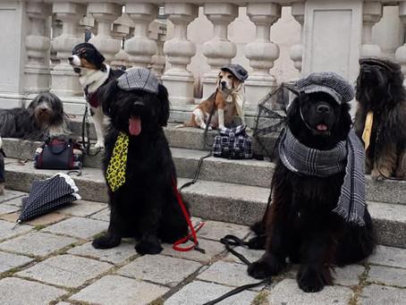 Verschiebung Trick- und Dogdanceseminar
