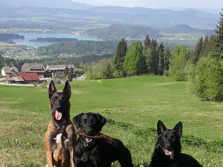 Seminare Schweiz und Kärnten 2020 sind online!