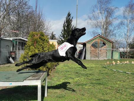 Rettungshunde -Kenndecken wieder im Onlineshop erhältlich