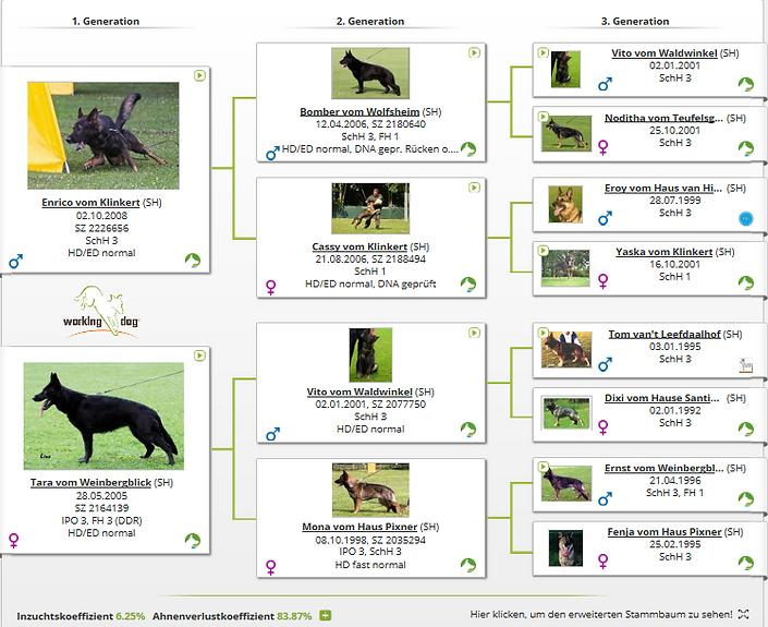 gustl pedigree.PNG