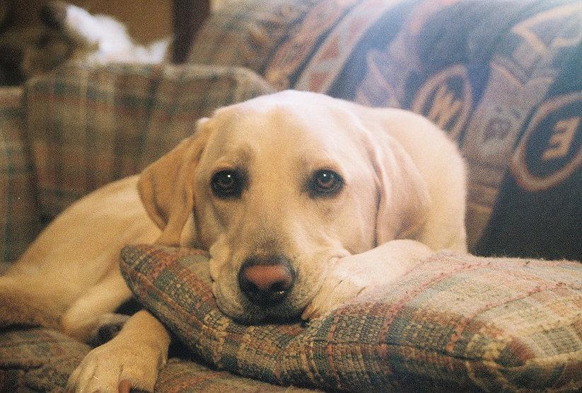 Couch Buddy1.jpg