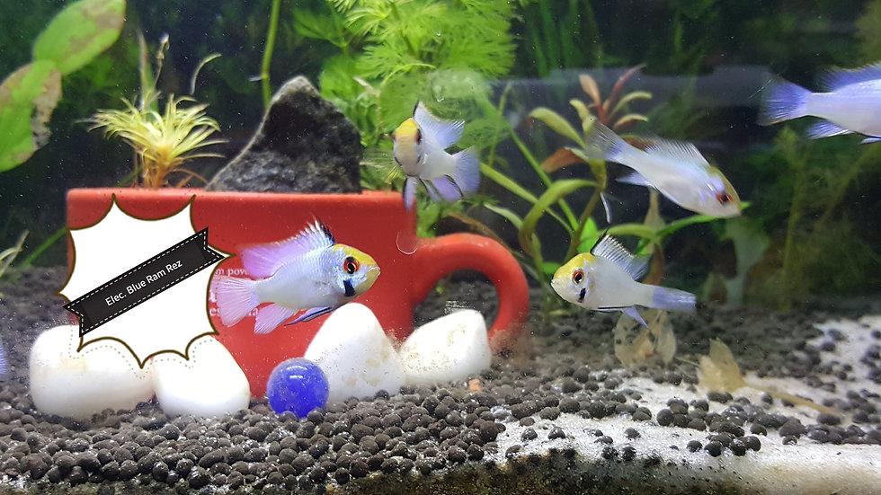 Aquarium Fish for same