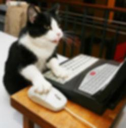 cat-on-keyboard-4.jpg