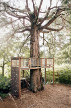 second level around tree.jpg