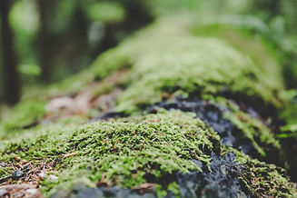 Canva - Green Grass (1).jpg