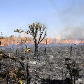 Macururé, Rodelas e Jeremoabo estão entre os 10 municípios mais afetados pela diminuição da Caatinga