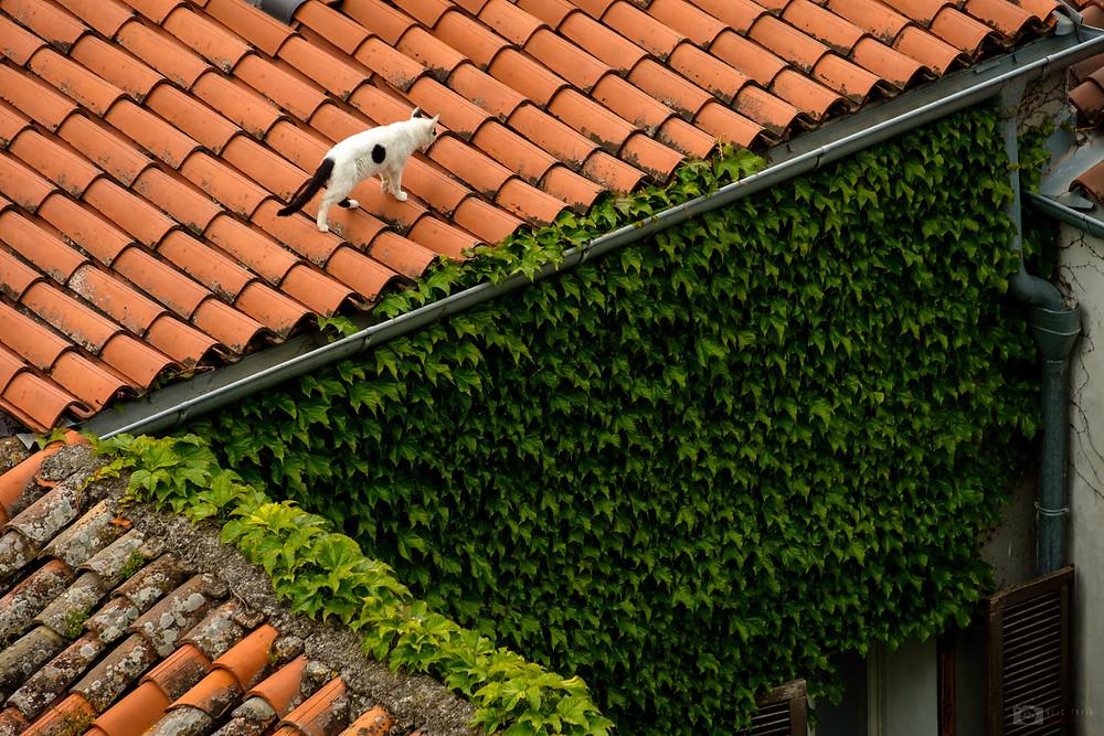 Piran roofs