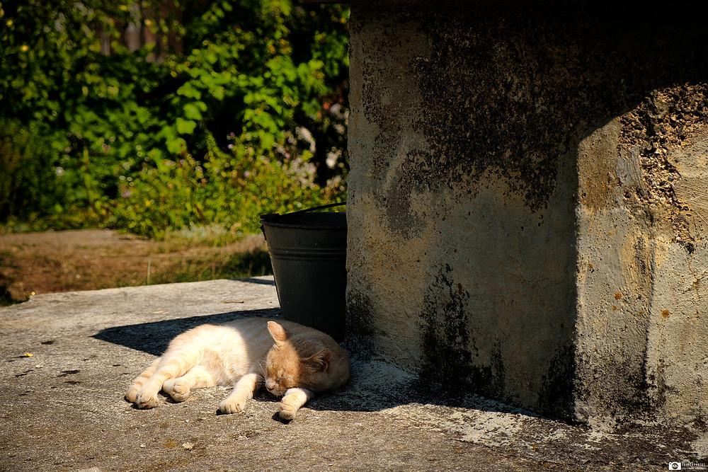 Cats, Croatia