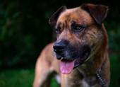Benjo the dog