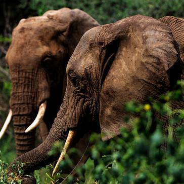 Tanzania's Safaris and Fujinon XF 100-400mm