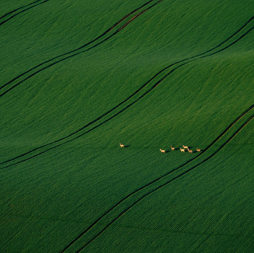 From the Diary: Moravia