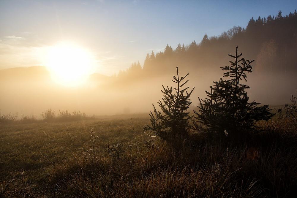 Kočevski gozd