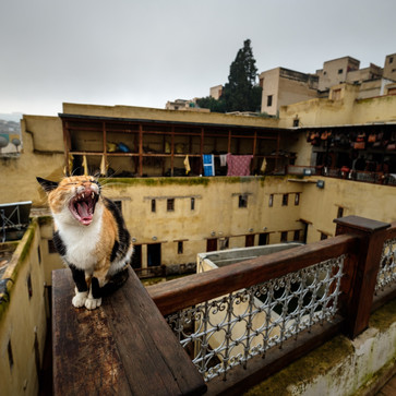 Classic: Cats of Morocco