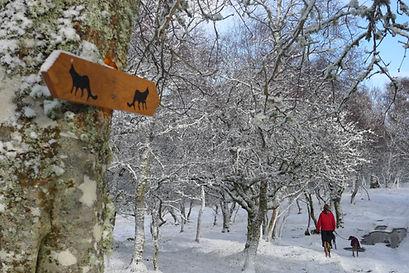 Wildcat trail snow.JPG