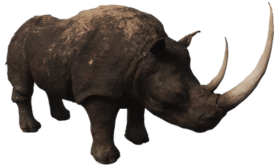 Rhino-PNG-Photos.png