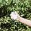 Thumbnail: Zodiac Air, Fresh Tuberose