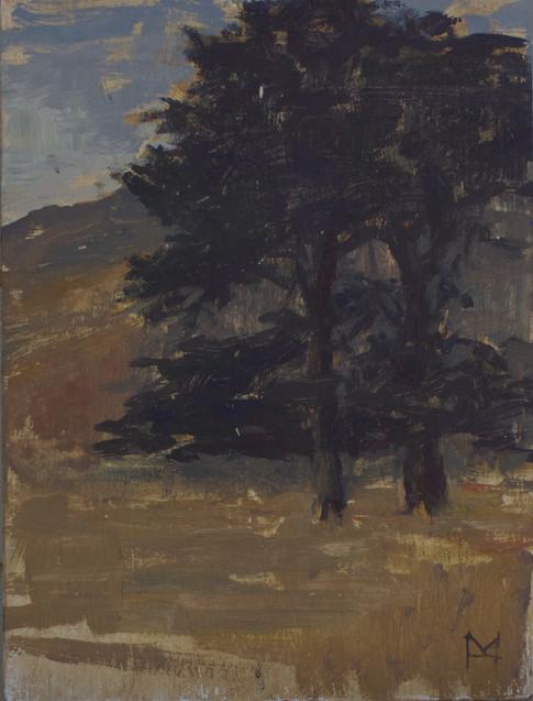 Tree - Big Sur