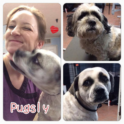 Pugsly kisses