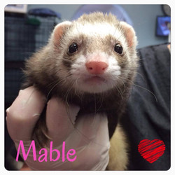 Mable for a nail trim