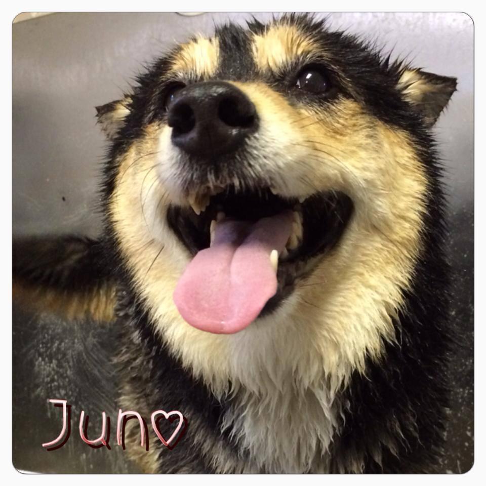 Juno smiling