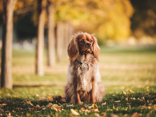 Do pets really need grooming during the winter months?