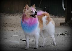 Pensacola Dog Grooming Creative