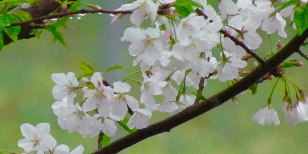 March Day of Zen