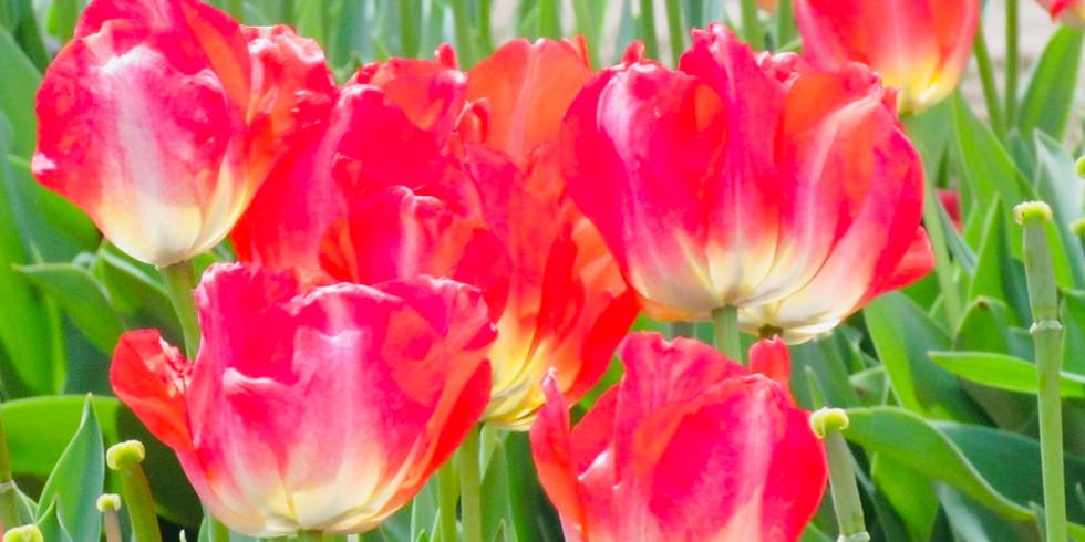 April 21-26 Spring Sesshin