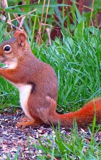 Squirrel2-SAI-sharpen.jpg