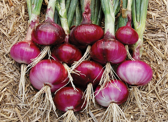 Red & White Onions