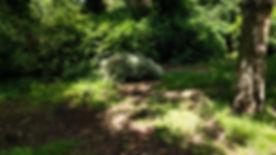 IMG_20170603_110226[1].jpg