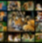 Image Optimization for SEO