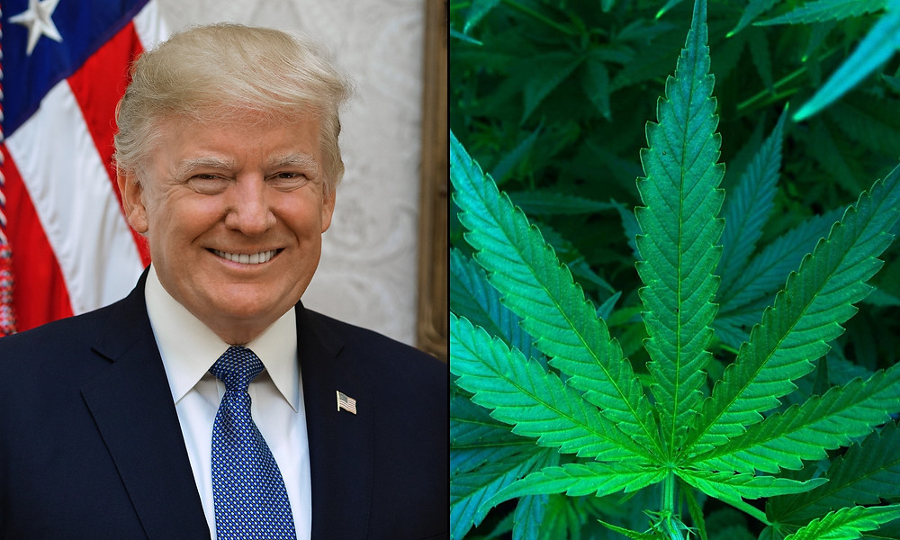 President Trump on Monday urged Republicans not to place marijuana legalization initiatives on state ballots out of concern that it will increase Democratic turnout in elections.