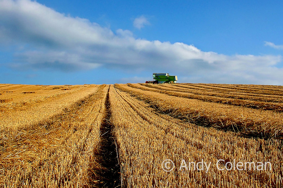 This image attempts to capture the atmosphere of openness and fertility in this sometimes stark but beautiful area which borders on to the Romney Marsh near to Winchelsea in East Sussex.