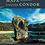 Thumbnail: Caleta Cóndor (especial)