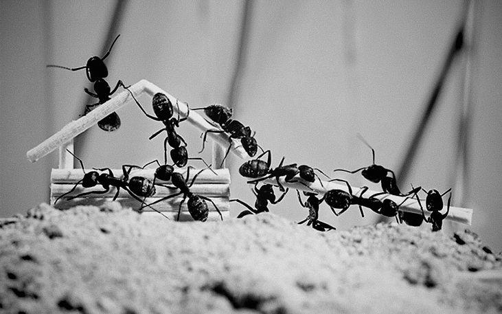 蟻浪漫3.jpg