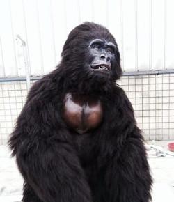 Hire a Robot gorilla