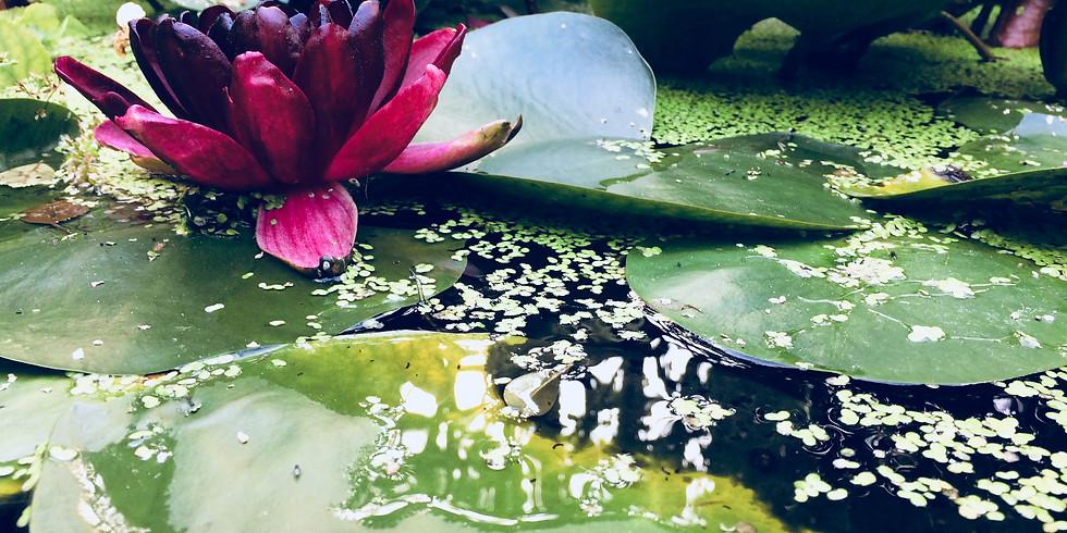June Sanctuary (Sentience) Virtual