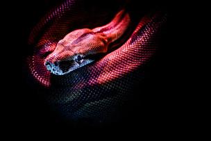 snake, serpent, worm