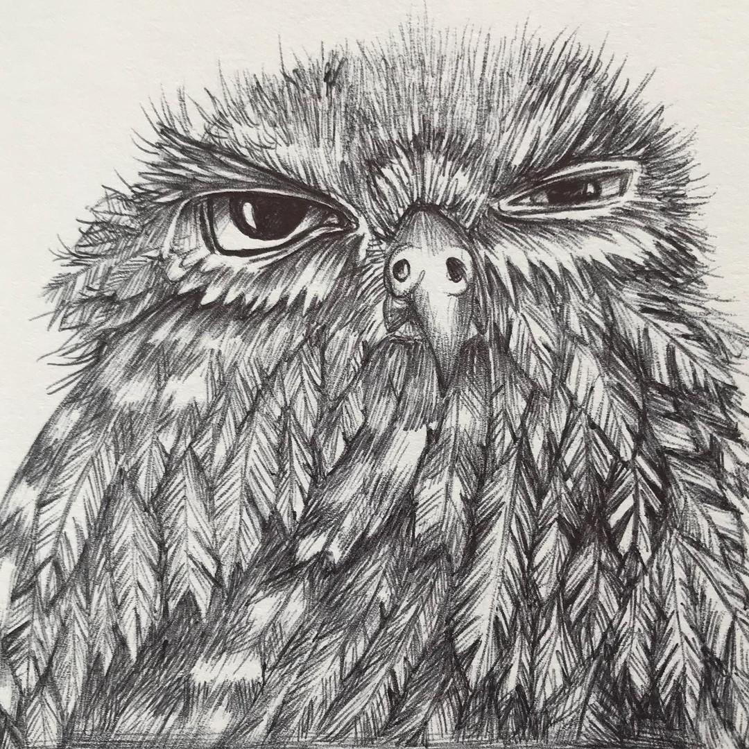Grumpy Owl 2