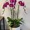 Thumbnail: Triple Single Orchid