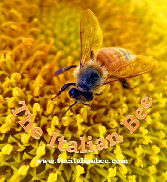 The Italian Bee