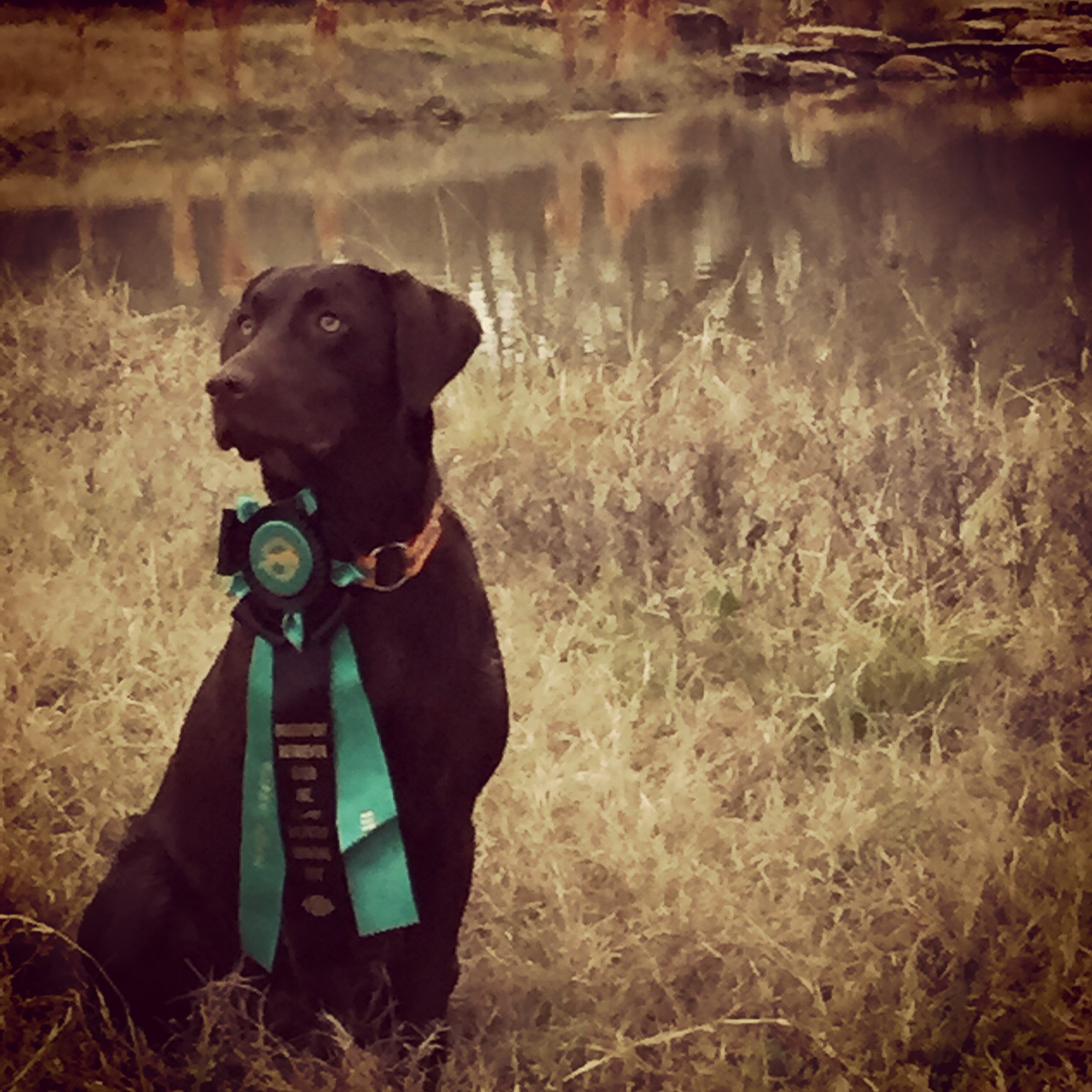 Oak Creek Retrievers and Training