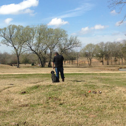 Oak Creek Retrievers and Training