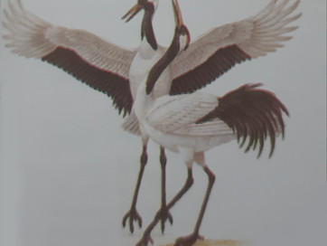 Crane - What is the meaning and symbolism of the birds in our lives?