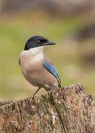 עקעק - מה המשמעות והסמליות של הציפורים בחיינו?