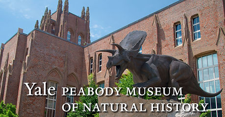 Yale Peabody.jpg